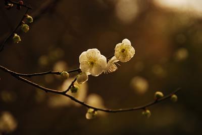 脆弱的不是人心,而是花朵